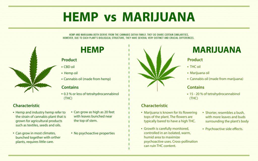 This image describes the disgusting differences between the Hemp plant and the Marijuana plant.